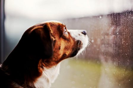 perros-con-miedo-a-las-tormentas