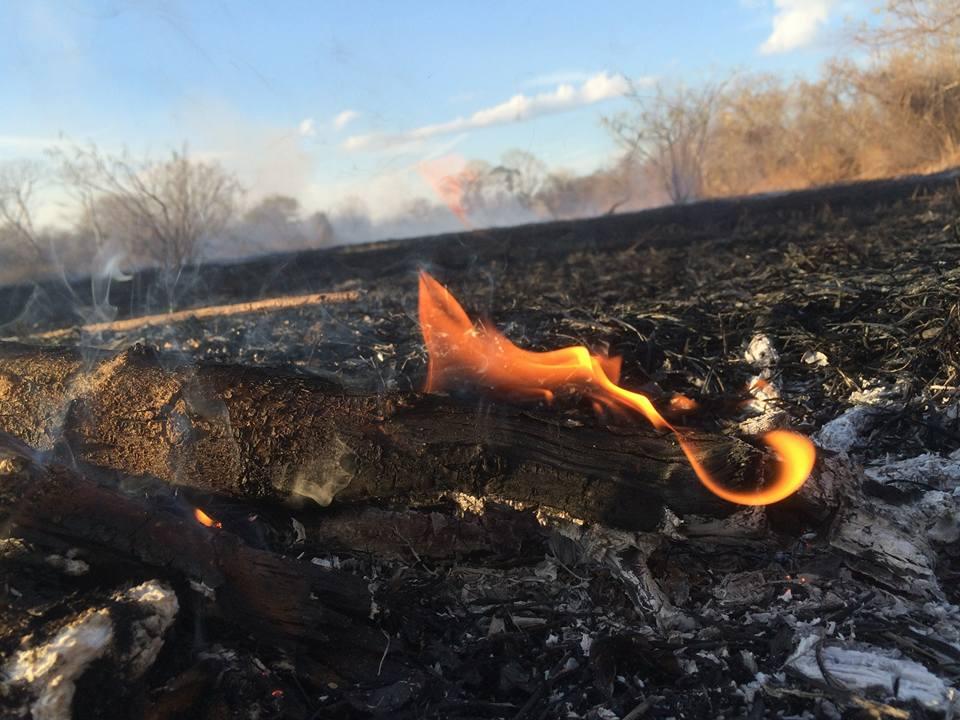 Incendio que afectó el Área de Conservación Guanacaste, ACG.